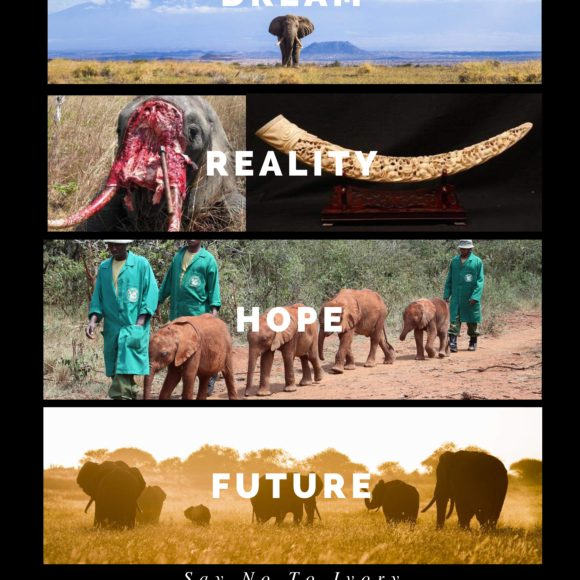 The Elephant Foundation & African Wildlife Foundation Gala Dinner