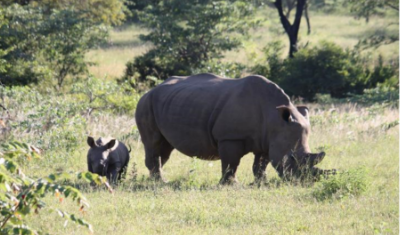 Save the Rhinos Charity Event – 3 May 2019